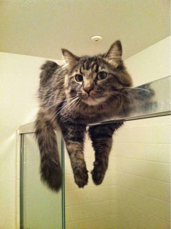 http://amazing-creature.blogspot.fr/2015/04/funny-cats-part-151-40-pics-10-gifs.html#.Vrnk8FjhC70
