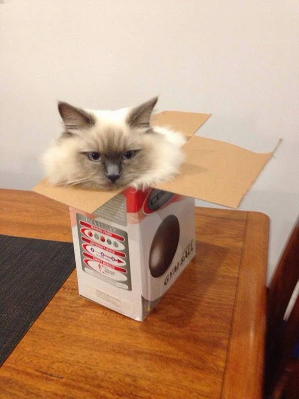 chats-endroits-improbables-bizarres (18)
