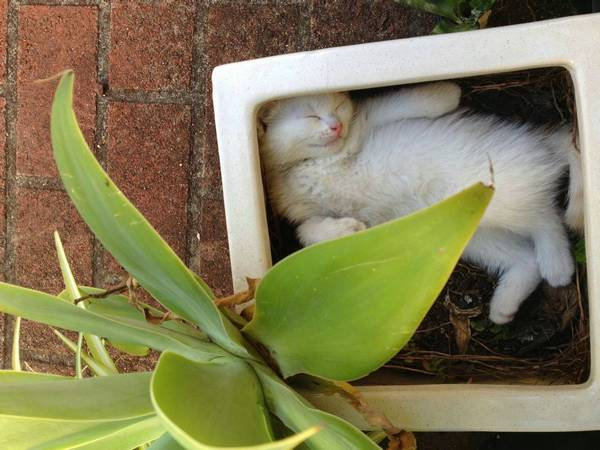 http://amazing-creature.blogspot.fr/2014/05/funny-cats-part-104-40-pics-10-gifs.html#.VrymxPLhC70