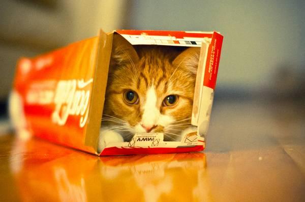 chats-endroits-improbables-bizarres (3)