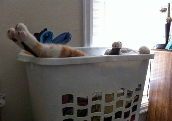 http://amazing-creature.blogspot.fr/2014/09/funny-cats-part-121-40-pics-10-gifs.html#.VryZvPLhC71
