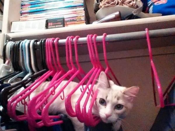 http://zippy-tube.com/find-the-cat/