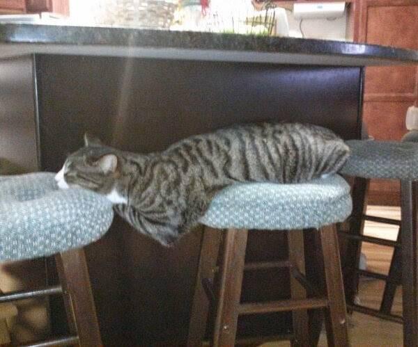 http://amazing-creature.blogspot.fr/2015/04/funny-cats-part-148-40-pics-10-gifs.html#.VrnnjVjhC70
