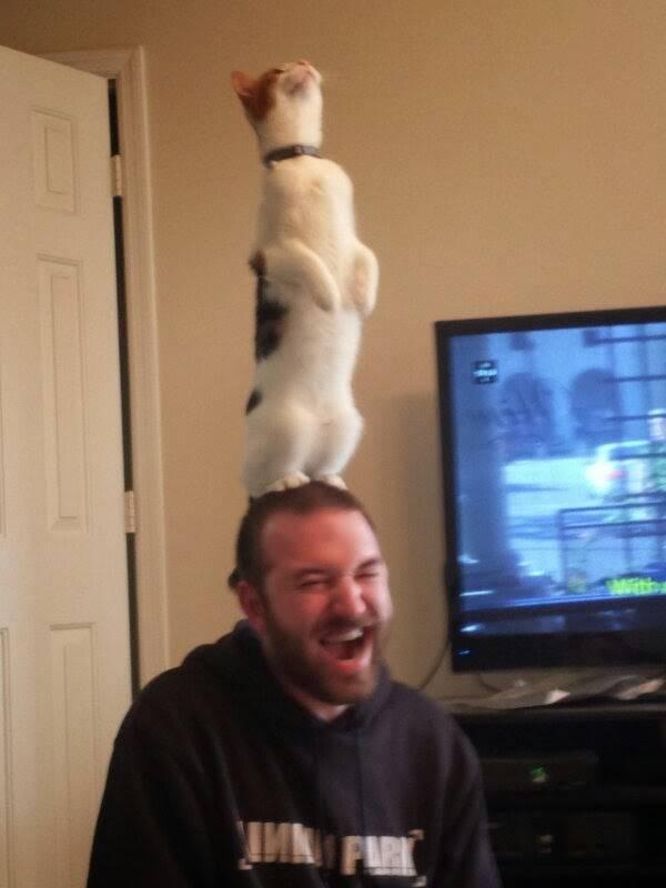 http://amazing-creature.blogspot.fr/2014/05/funny-cats-part-103-40-pics-10-gifs.html#.VrynC_LhC70