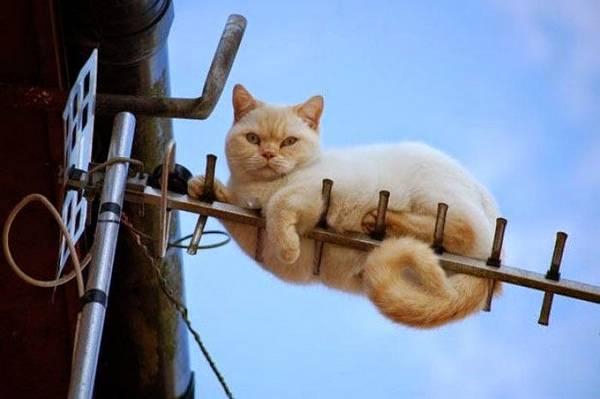 http://amazing-creature.blogspot.fr/2014/07/funny-cats-part-112-40-pics-10-gifs.html#.VryikfLhC70