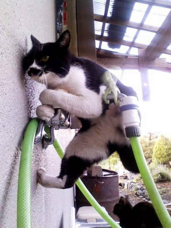 http://amazing-creature.blogspot.fr/2014/06/funny-cats-part-108-40-pics-10-gifs.html#.VryjzvLhC70