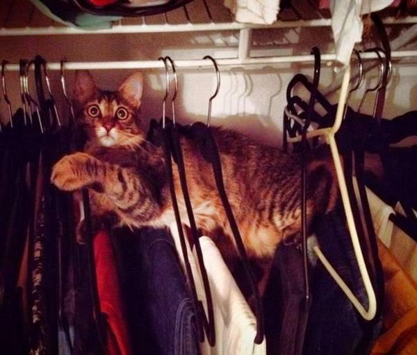 http://amazing-creature.blogspot.fr/2014/03/funny-cats-part-92-40-pics-10-gifs.html#.Vr3gPfLhC70