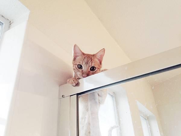 chats-pas-decides-tranquille (1)