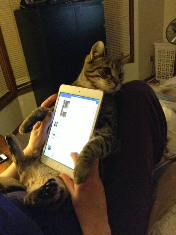 http://amazing-creature.blogspot.fr/2014/11/funny-cats-part-129-40-pics-10-gifs.html#.VroHTljhC70