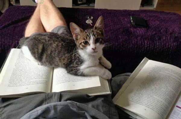 chats-pas-decides-tranquille (11)