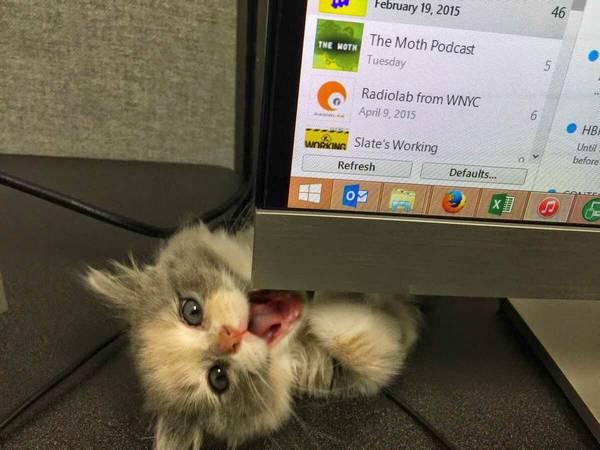 http://amazing-creature.blogspot.fr/2015/04/funny-cats-part-152-40-pics-10-gifs.html#.VrjXJFjhC70