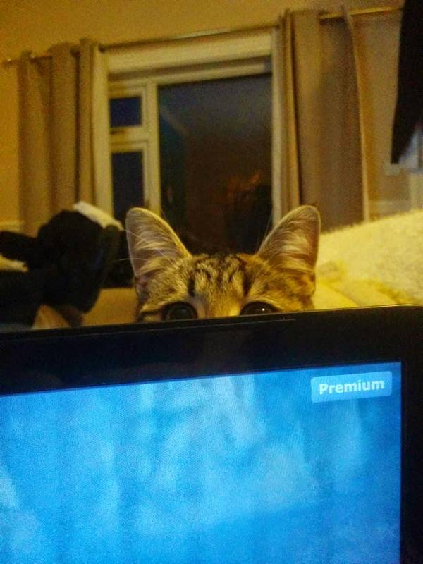 http://amazing-creature.blogspot.fr/2014/08/funny-cats-part-114-40-pics-10-gifs.html#.Vryd-PLhC70