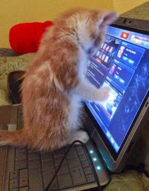 http://amazing-creature.blogspot.fr/2014/04/funny-cats-part-100-40-pics-10-gifs.html#.VrzB0fLhC70