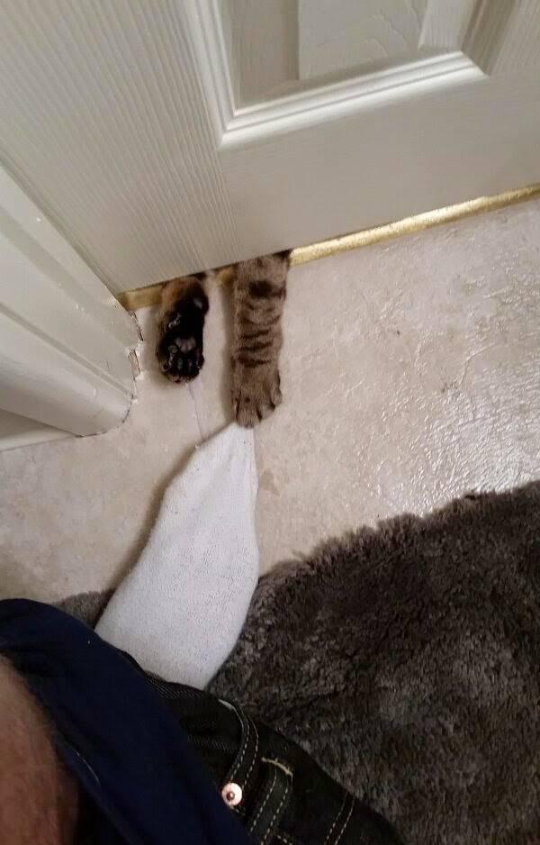 http://amazing-creature.blogspot.fr/2014/05/funny-cats-part-101-40-pics-10-gifs.html#.VrzBJvLhC70