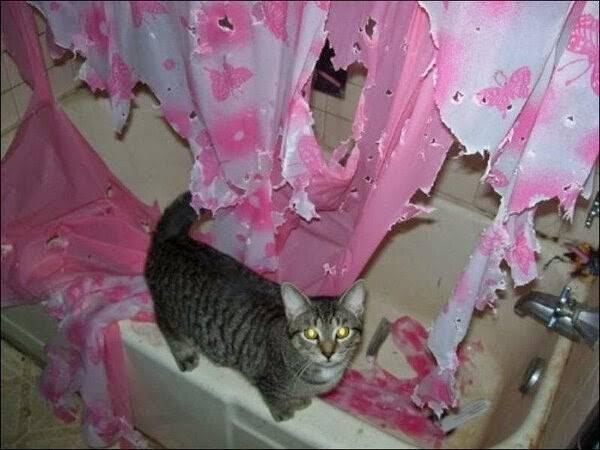 http://amazing-creature.blogspot.fr/2014/08/funny-cats-part-115-40-pics-10-gifs.html#.Vryde_LhC70