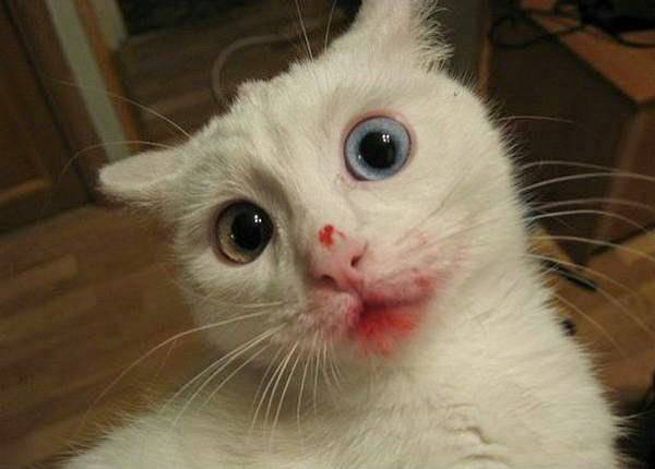 http://amazing-creature.blogspot.fr/2014/09/funny-cats-part-119-40-pics-10-gifs.html#.Vryb4vLhC70