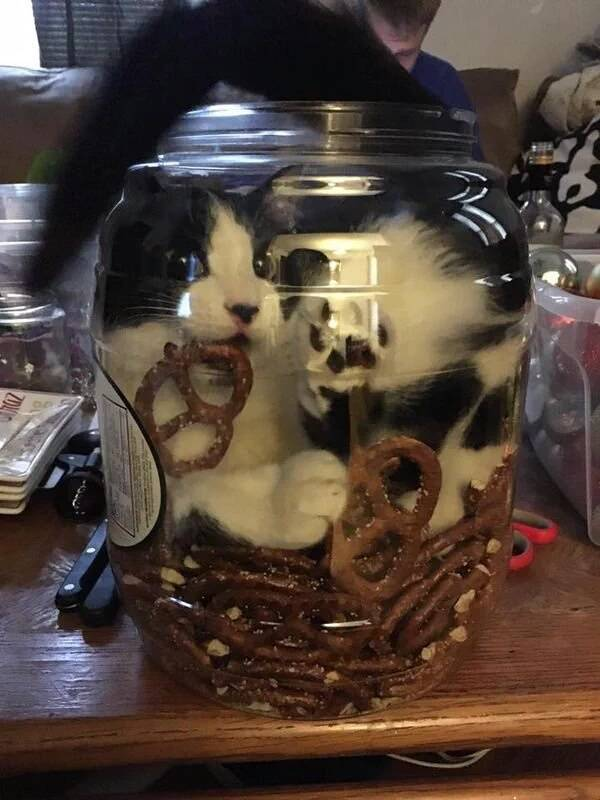 http://amazing-creature.blogspot.fr/2016/01/funny-cats-part-191-40-pics-10-gifs.html#.VsXTofLhC70