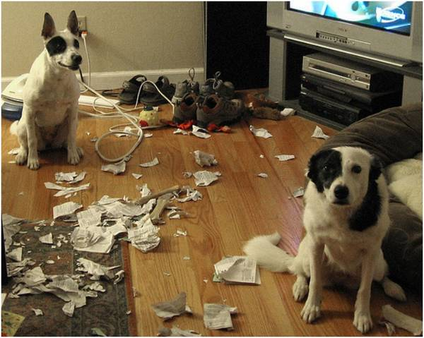 http://www.explosion.com/77161/35-dogs-saying-need-new-furniture/