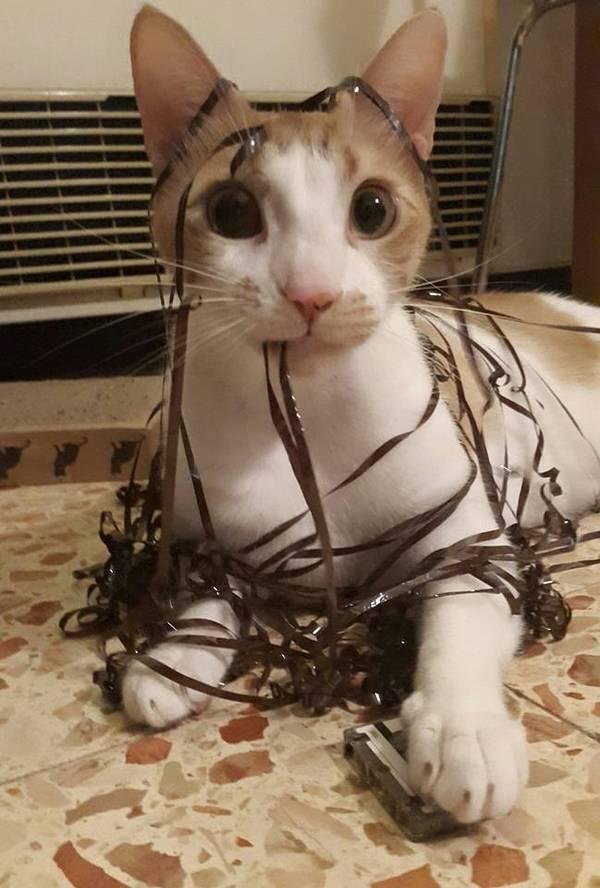 http://amazing-creature.blogspot.fr/2016/01/funny-cats-part-192-40-pics-10-gifs.html#.VsXTofLhC70