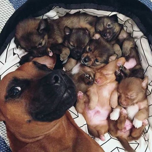 http://www.picaster.com/animals/selfie-of-the-year-dog-with-new-born-kids.html