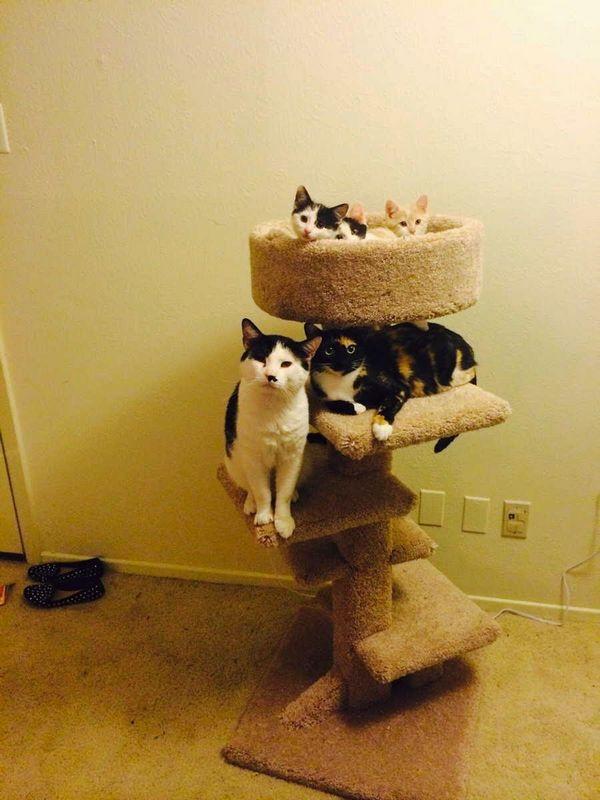 http://amazing-creature.blogspot.fr/2014/12/funny-cats-part-134-40-pics-10-gifs.html#.VroFcFjhC70