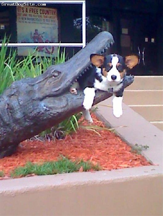 http://www.dumpaday.com/wp-content/uploads/2014/06/funny-animals-93.jpg