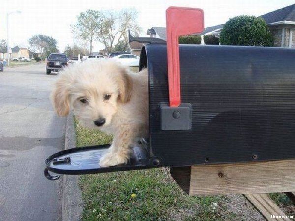 http://www.supercoolpets.com/pictures/puppymail.jpg