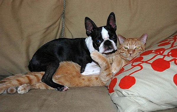 http://smilepost.ru/uploads/posts/2012-02/frisky_cats_busted_640_07.jpg