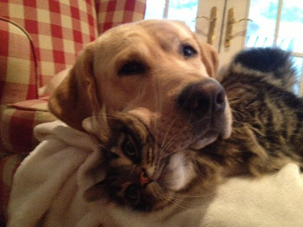 https://i1.wp.com/netgeek.biz/wp-content/uploads/2014/11/cat_helper-11.jpg