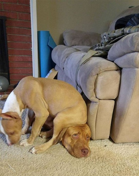 http://www.barnorama.com/wp-content/images/2015/02/dogs_violate_personal_space/13-dogs_violate_personal_space.jpg