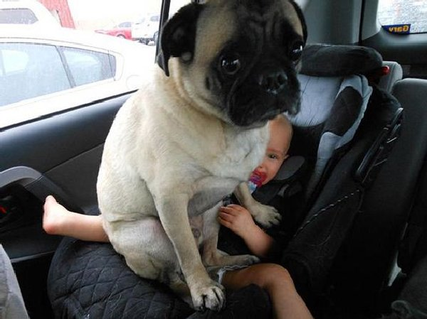 http://www.barnorama.com/wp-content/images/2015/02/dogs_violate_personal_space/14-dogs_violate_personal_space.jpg
