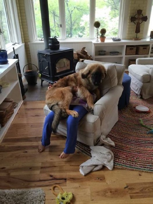 http://www.barnorama.com/wp-content/images/2015/02/dogs_violate_personal_space/26-dogs_violate_personal_space.jpg