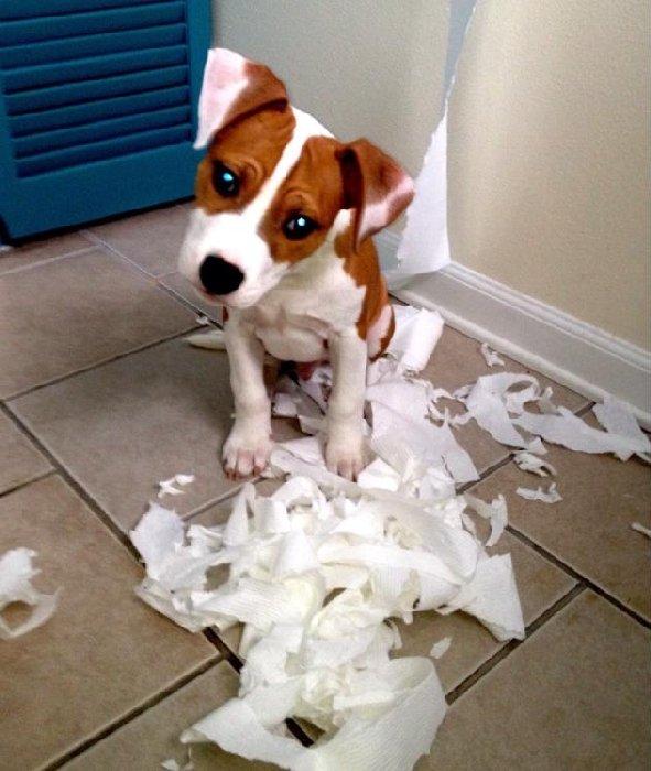 http://barkpost.com/wp-content/uploads/2014/06/TPpuppydogeyes.jpg