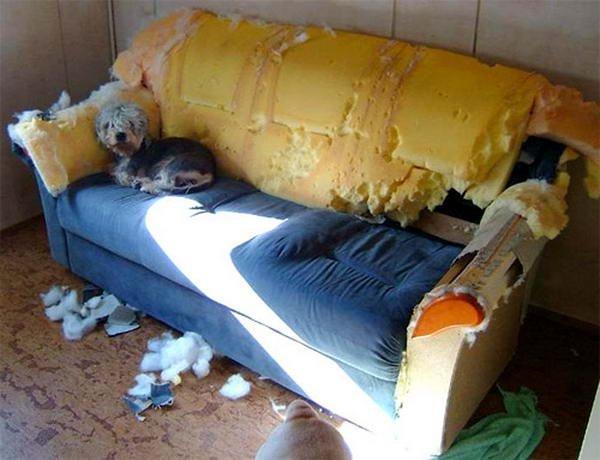 http://www.dezinfo.net/images2/image/09.2008/gladit/1030.jpg