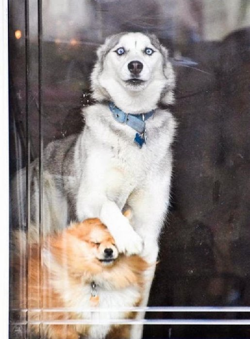 http://files1.adme.ru/files/news/part_88/887710/14778760-R3L8T8D-650-cute-dogs-047-10.jpg