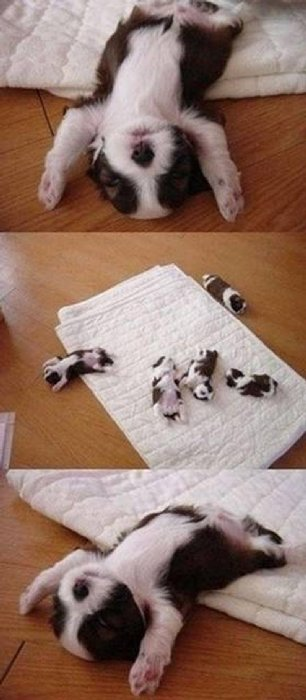 http://perfecto.buzz/wp-content/uploads/2015/07/15-puppy-heroes-fully-committed-napping-everywhere_ddf7aa7e0fd578903d75ab06d6b9efe7.jpg