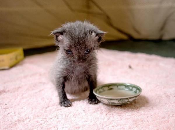 bruce-le-chaton (11)