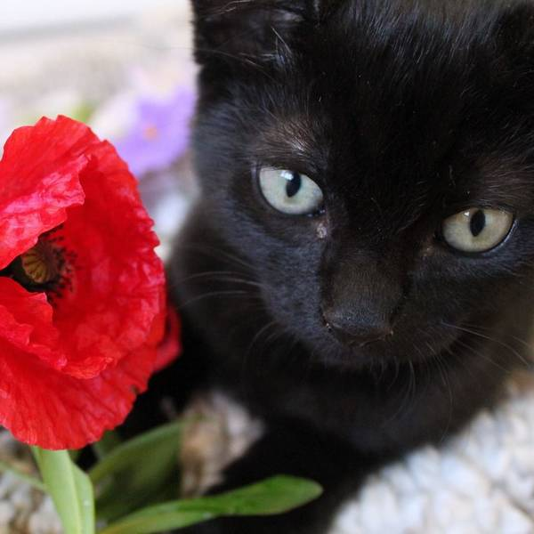 bruce-le-chaton (12)