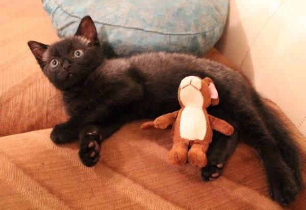 bruce-le-chaton (7)