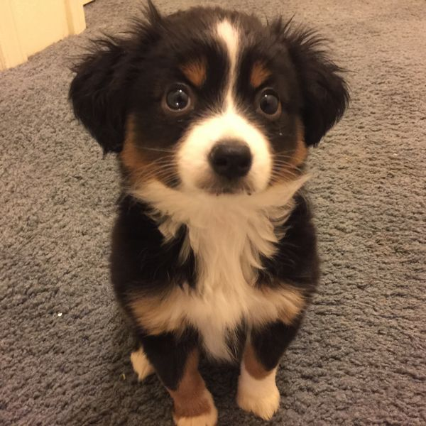 http://rebrn.com/re/my-puppy-cora-giving-me-her-best-puppy-dog-eyes-2530552/