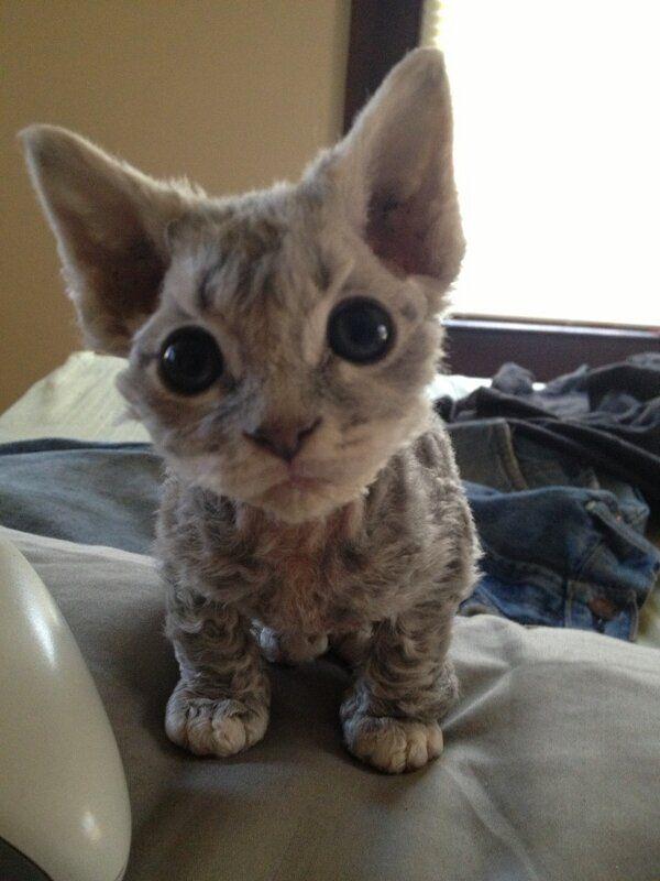 http://amazing-creature.blogspot.fr/2016/03/funny-cats-part-196-40-pics-10-gifs.html