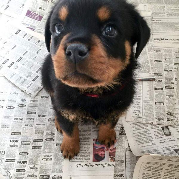 http://amazing-creature.blogspot.fr/2016/02/cute-dogs-part-114-50-pics.html#.VtQPzpzhC70