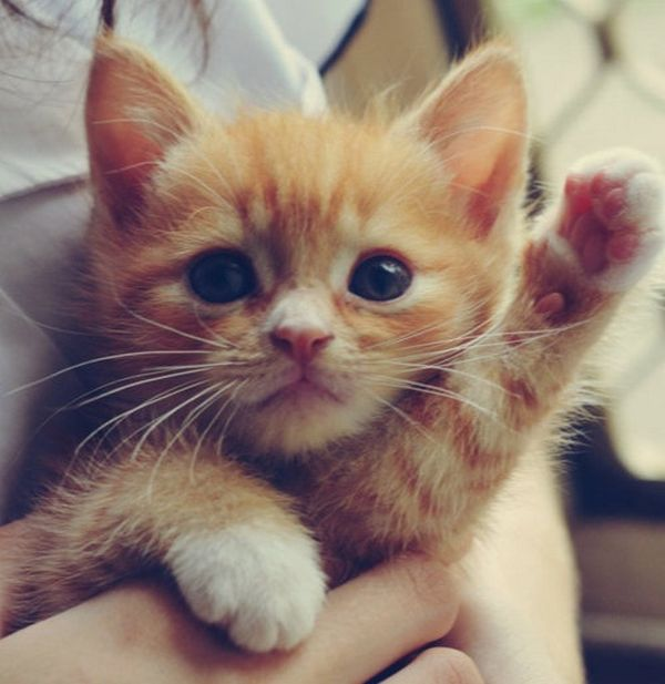 chatons-chiots-ont-fait-craquer (7)