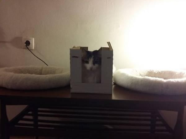 http://www.boredpanda.com/funny-gifts-for-cats-logic/
