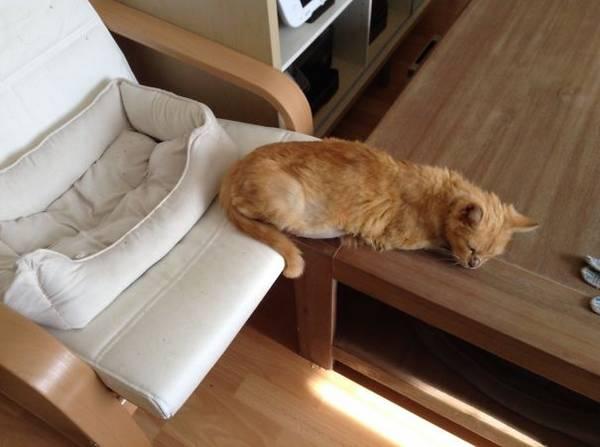 http://www.boredpanda.com/funny-gifts-for-cats-logic