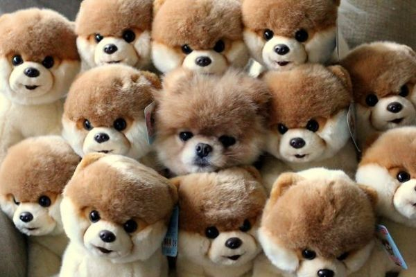 http://www.techtimes.com/articles/28659/20150131/good-finding-things-dogs-bad-hide-seek.htm