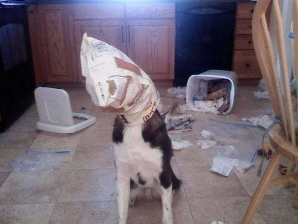 http://www.humorsharing.com/funny-animals/5850