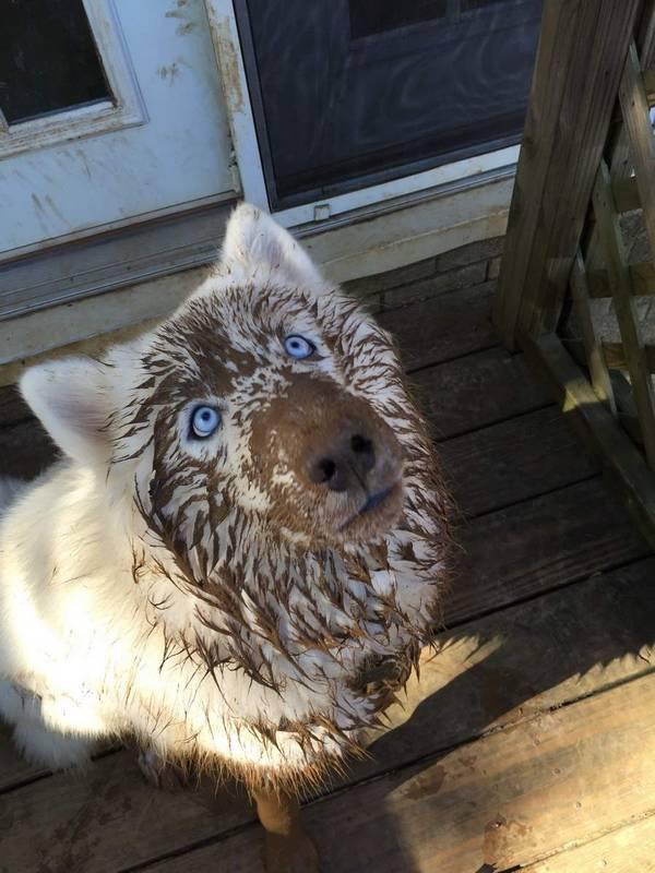 http://amazing-creature.blogspot.fr/2016/02/cute-dogs-part-111-50-pics.html#.VsXdxfLhC70