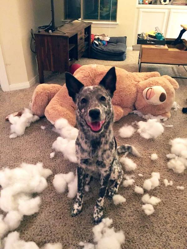 http://amazing-creature.blogspot.fr/2015/10/cute-dogs-part-95-50-pics.html#.VscjRvLhC70
