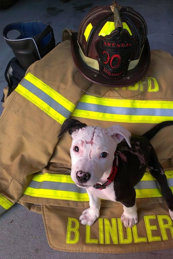 jake-incendie-pompier (4)
